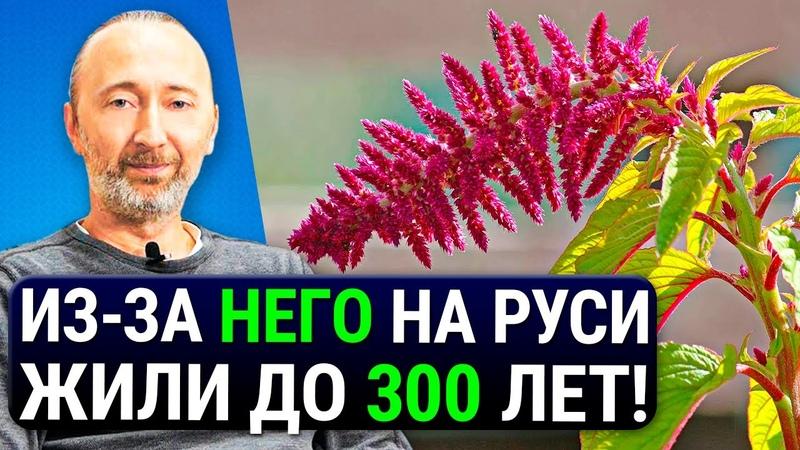 ОН дарует бессмертие защищает от РАКА и старения ЕГО состав как у грудного молока Еда №1 на Руси