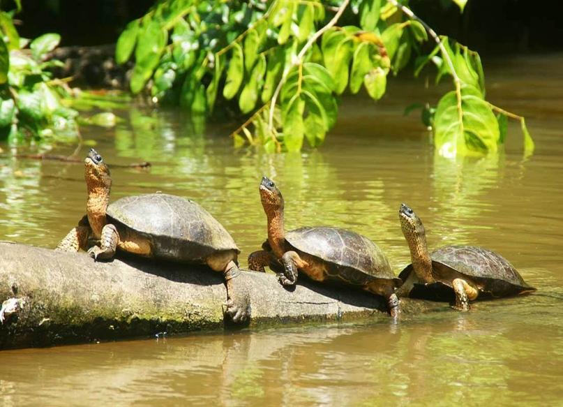 Что посмотреть в Коста-Рике?, изображение №5