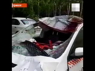 На Серовском тракте таксист сбил лося
