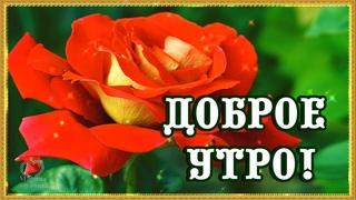 С Добрым Утром!🌺 С Новым днём!🌺 Начинайте Жизнь с Утра!🌺 Обязательно 🌺С Добра!🌺💖