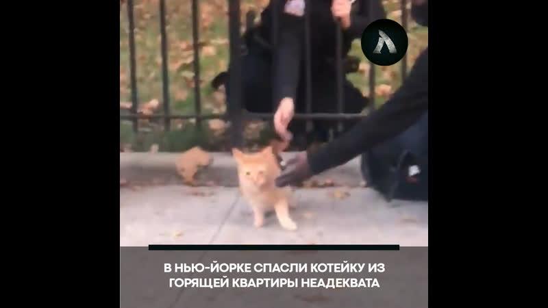 В Нью Йорке спасли кота из горящего здания АКУЛА