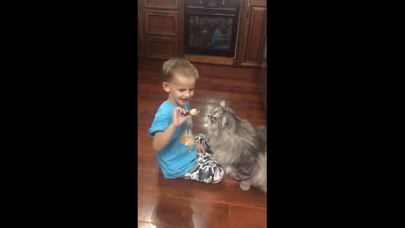 Кот - друг человека