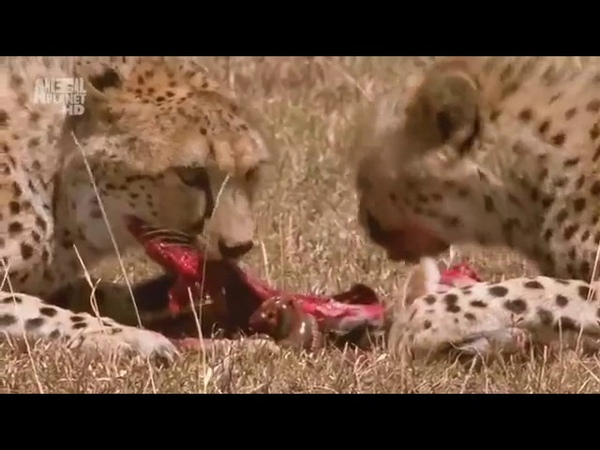 В дебрях Африки НАМИБИЯ