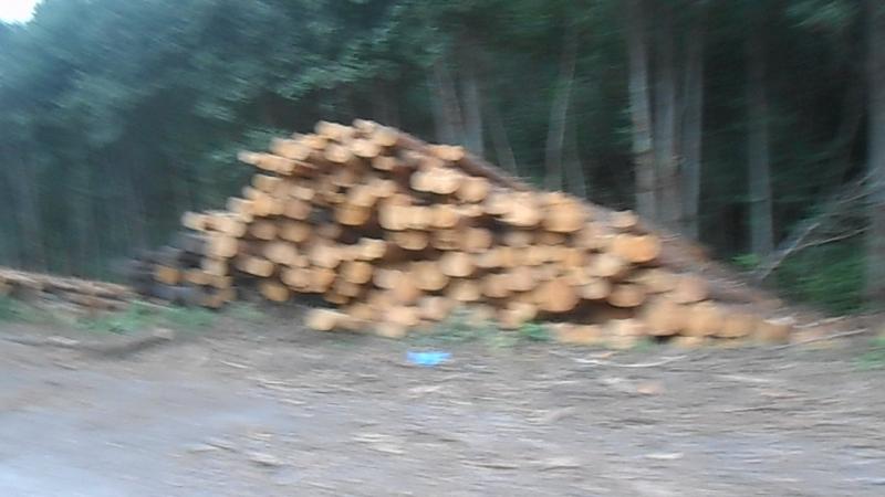 Лес жалко! В Устье-Кубенском районе у деда Играя. ВидеоМИГ