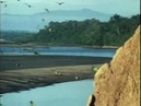 Parrots Elephants Butterflies eat/drink clays minerals salts