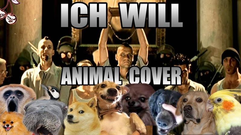 Rammstein - Ich Will (Animal Cover)