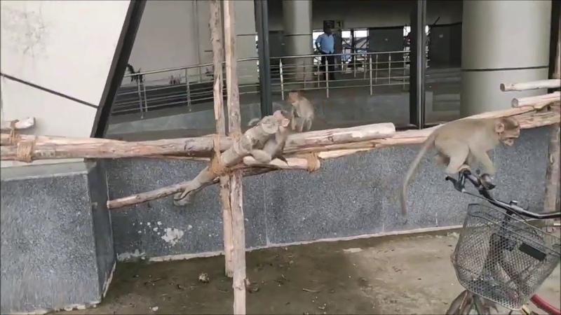 Shashi в пути Ограбление обезьянами Индия Из Путтапарти в Джайпур долгая дорога