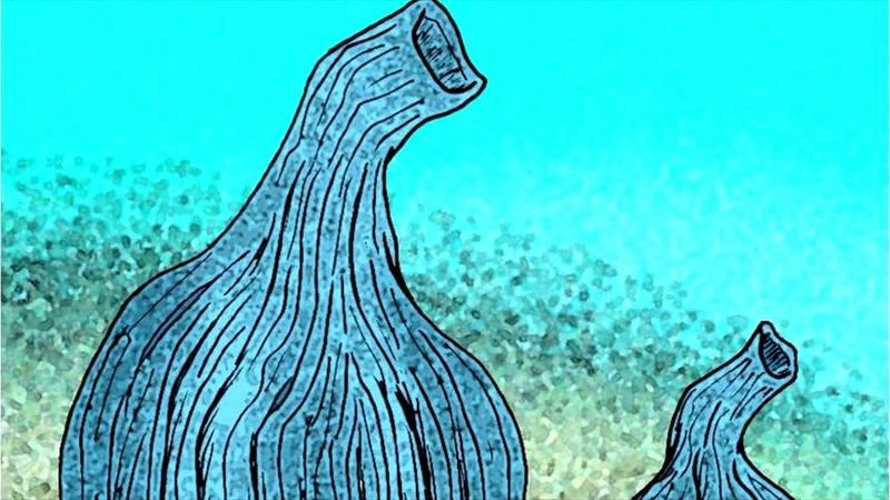 Развитие жизни на Земле The Evolution of Life Инария Inaria