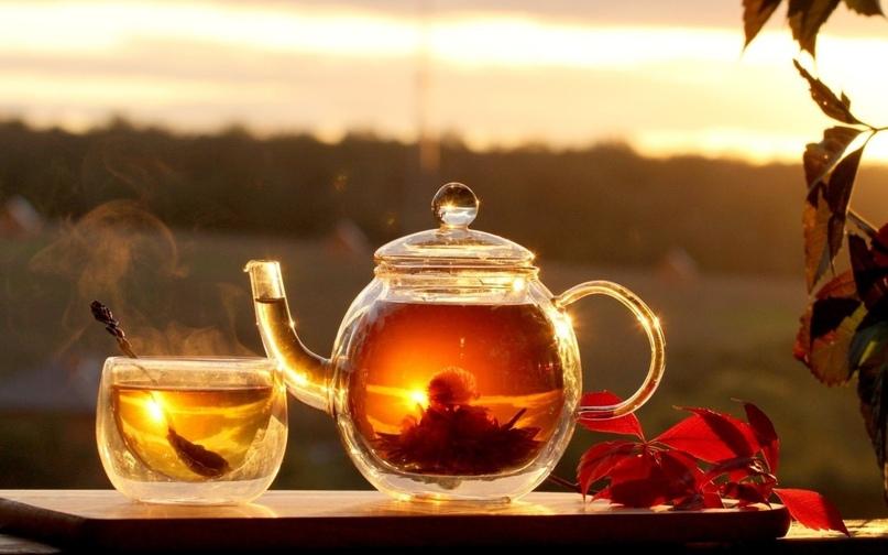 7 самых полезных видов чая, изображение №2