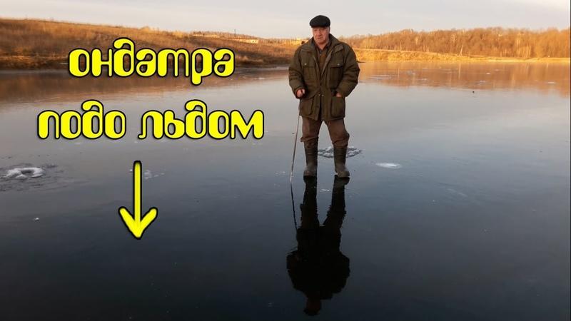 Прозрачный первый лёд как на БАЙКАЛЕ ОНДАТРА подо льдом водяная крыса