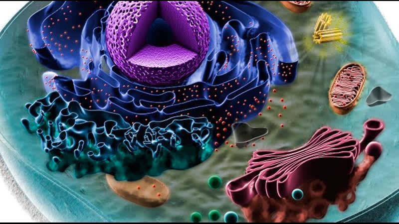 BBC Клетка Химия жизни