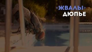 Разбор фильма «Жвалы» К. Дюпье / «Киноведы» # 51