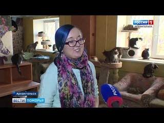 Музей архангельской кошки создают волонтёры реабилитационного центра Кот и Дом Серафим