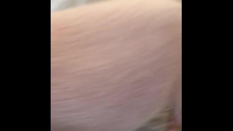 Резвый пиг