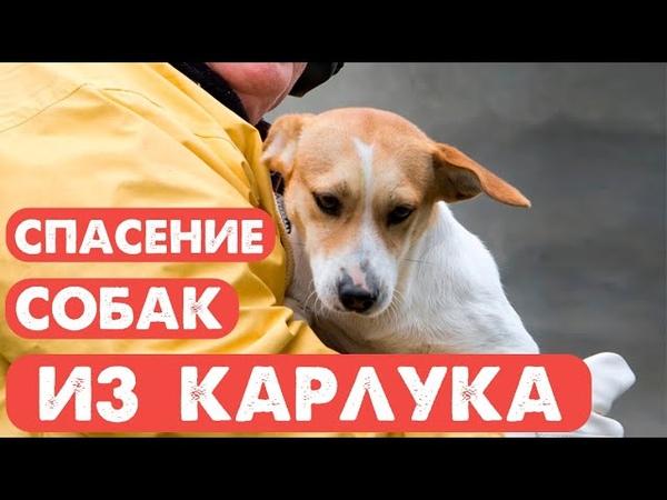 Спасение собак из концлагеря ООО Пять звёзд в Карлуке