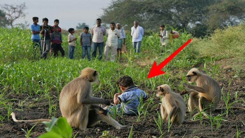 Bocah 2 Tahun Hidup Dengan Gerombolan Monyet Faktanya Mencengangkan