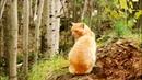 Осень - кошка в рыжих сапогах