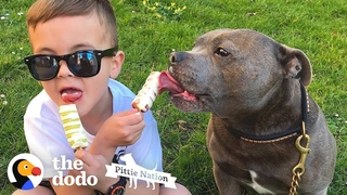 Pittie Hasn't Left His Brother's Side In 7 Years | The Dodo Pittie Nation
