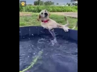 Играл в бассейне со шлангом. Проиграл