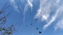 Николаевские голуби. Крым. Молодеж 2020 на перелёте