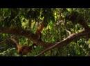 Амазония_ Инструкция по выживанию 2014 3D