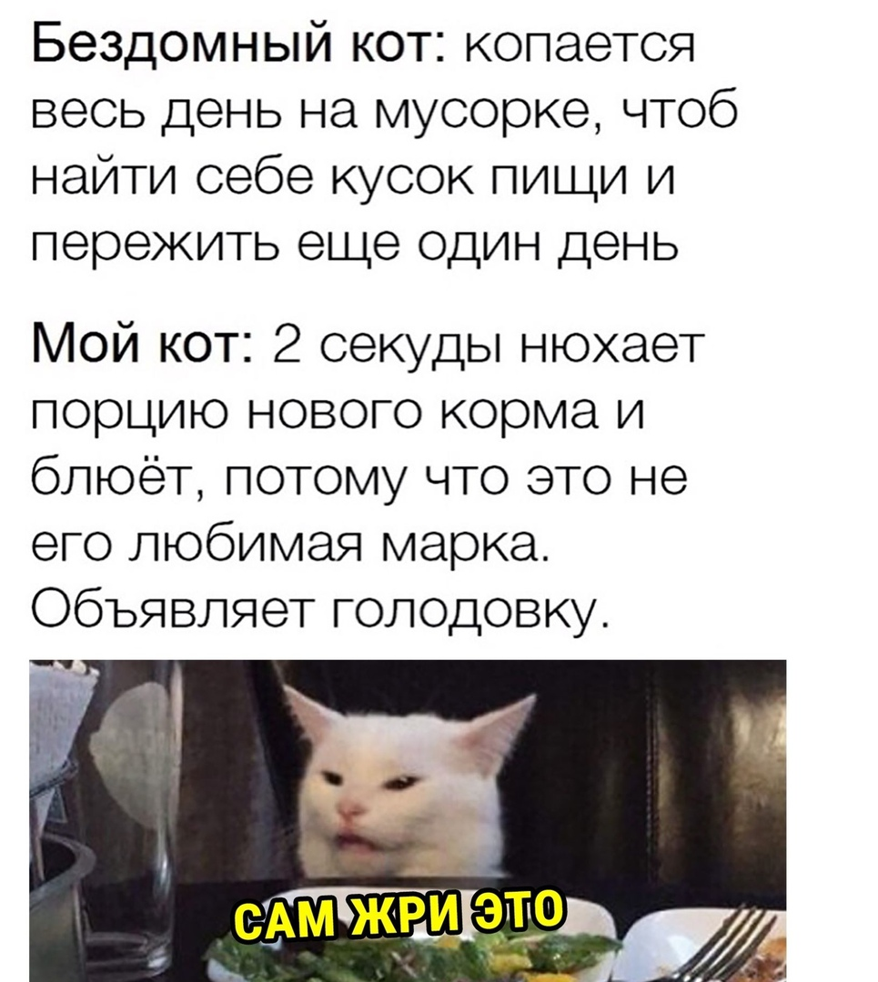 бездомный кот домашний кот прикол