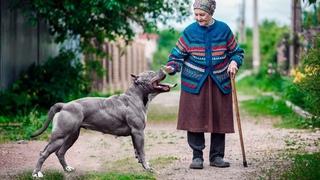 Бабушка приютила пса не догадываясь насколько он опасен, однажды соседи услышали жуткий крик