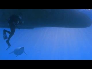 ВВС Прогулки с морскими чудовищами 2003 Фильм 2 В челюстях смерти