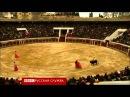 Испания Мадрид коррида быки забодали матадоров