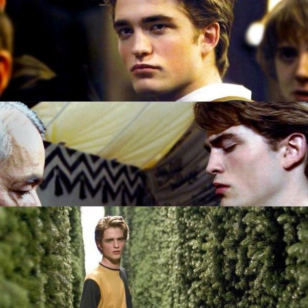 Cedric diggory gay