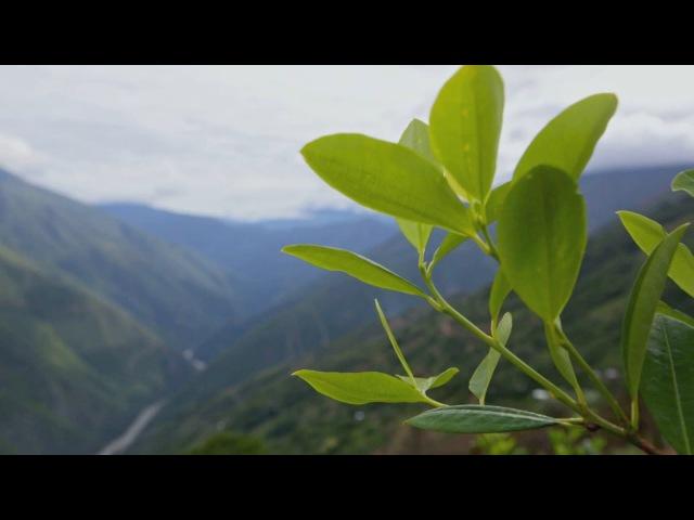 Бесконечные плантации коки Шашлык из морской свинки Боливия Мир Наизнанку 5 серия 7 сезон