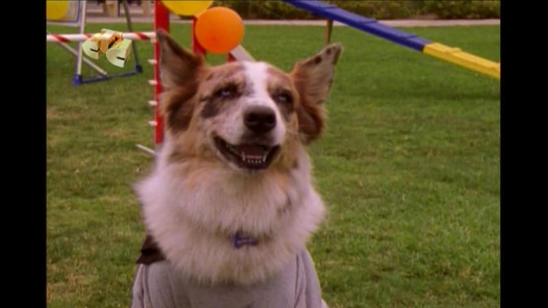 100 подвигов Эдди Макдауда 1 й сезон 17 я серия Хороший полицейский плохой пёс
