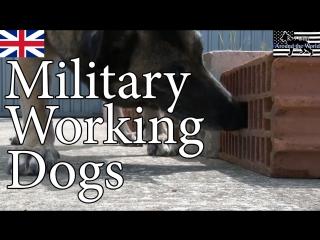 British military working dogs (mwd) k-9 unit