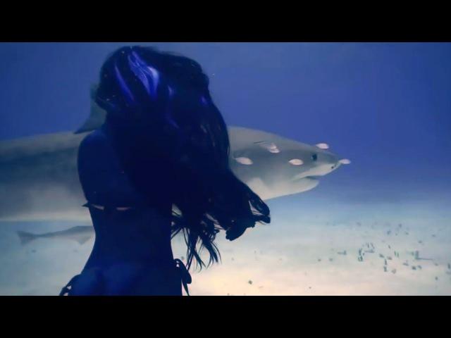 House Paul Mauriat Alouette X Mode Remix В Мире Животных Animals