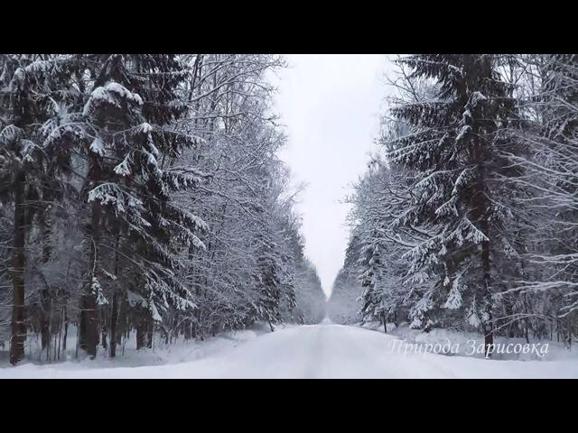 🌠 Зимний Лес ~ Дорога в Снегу с Красивой Природой Зима все Засыпало Снегом под Музыку
