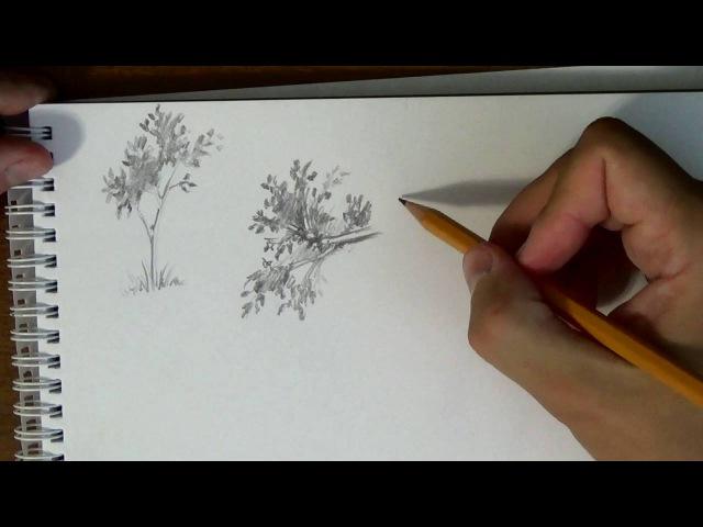 Основы рисунка Часть 16 как быстро и просто рисовать листья деревьев