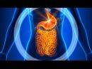 Heinz Reinwald Feuer im Darm Alle Krankheiten haben ihren Ursprung im Darm Hippokrates