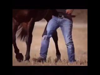 Танцующий конь ... КРАСАВЕЦ !!! ))) ...