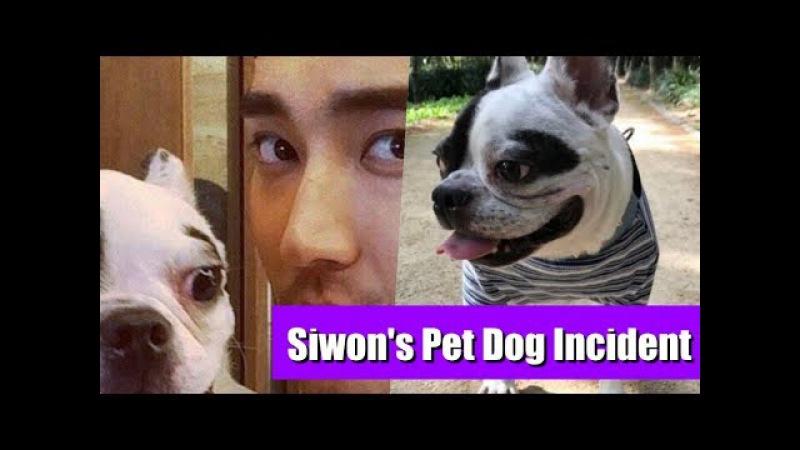 Super Junior Leeteuk's Past Post About Being Bitten Regains Attention After Siwon's Dog
