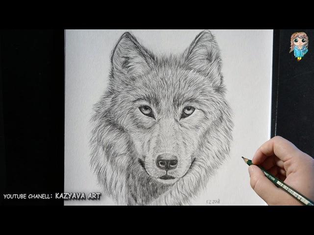 Как нарисовать морду ВОЛКА карандашом Подробный урок смотреть онлайн без регистрации