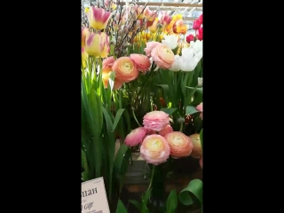 Выставка тюльпанов в Аптекарском огороде.