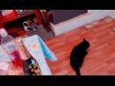 Приколы про кошек-Кошки пришел босс