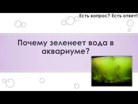 Почему зеленеет вода в аквариуме? 8