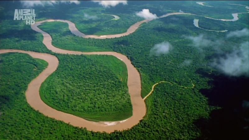 В дебрях Латинской Америки 1 серия Амазонка Один лес много миров
