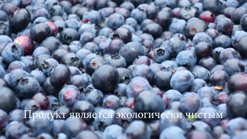 Крупнейшая ягодная плантация «КРЕМЬ».