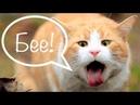Почему кошку тошнит