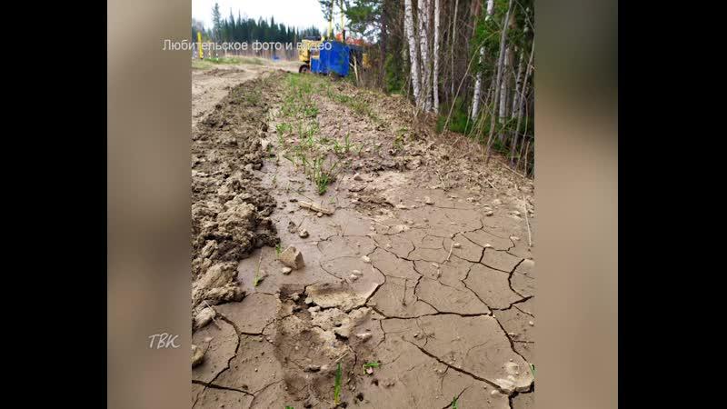 Несколько медведей напугали сторожа на участке газопровода в районе с. Инкино