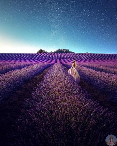 Лавандовые поля на Юге Франции