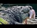 Crocodiles Alligators Gobble up Thanksgiving Dinner