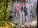 Лето, дождь и Август, исполняет Аранжировщик Алексей Косяков